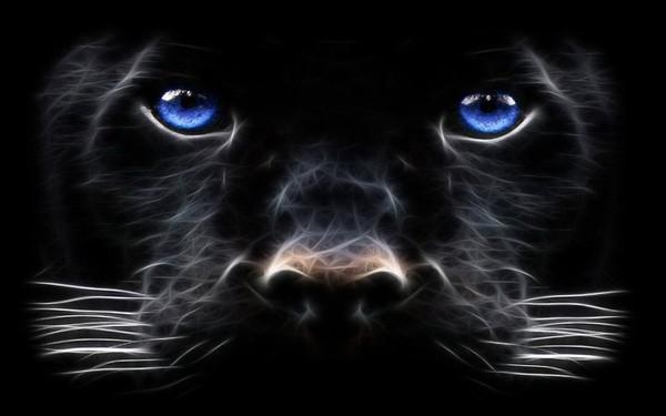 puma animal noir